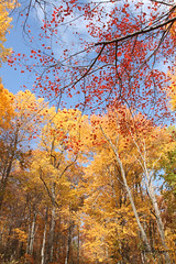 rendandyellow (jen selba) Tags: trees orange mountain tree green fall nature yellow virginia woods rocks view hiking va tall oldragmountain