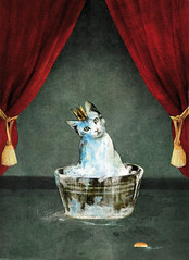 asensio11 (albert.asensio) Tags: cat kings gato princes princesa reyes