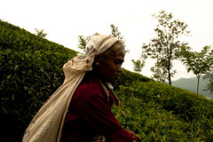 Tea pickers (codyturner666) Tags: srilanka teapickers teawomen