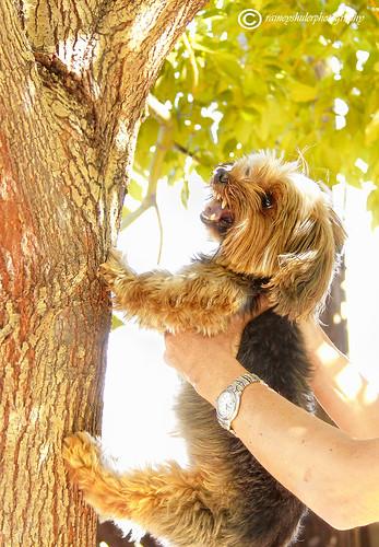 CoCo Attacks Tree