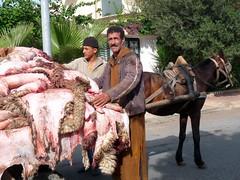 pendant l'Aïd 2009 (Corinne Béguin) Tags: people morocco maroc casablanca aïdelkebir aïd peauxdemoutons