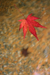 subconscious (maybemaq) Tags: autumn shadow red macro fall water japan ego season maple kyoto shrine details bottom floating surface momiji gion  shinto asymmetry coloured depth jinja breathtaking psychology yasakashrine purity  asymmetric higashiyama cleansing shintoism subconscious superego yasakajinja cotnrast the4elements colorphotoaward floatingontheair