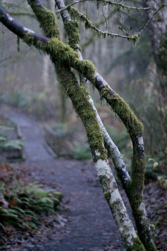 Watershed Park
