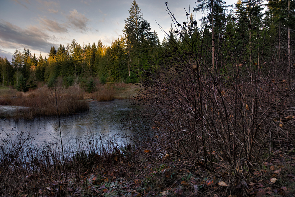 HDR-Pond-finished_6198