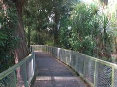 Pathway Lake Rotoroa