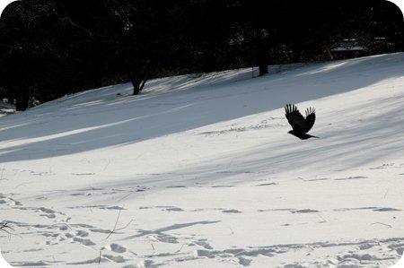 Winter Ottawalk near Dow's Lake and the Arboretum