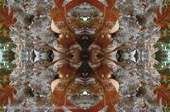 HERBST 1 (fotoflo.world) Tags: light art love digital mirror peace maya natur quad elements harmony florian spiegelbild mystic lamat wwwfotofloat keindl