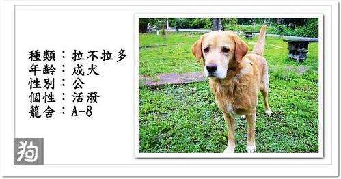 pobby-dog 拍攝的 20091226『只缺一個機會!』宜蘭收容所官網1225.黃金獵犬、拉布拉多、米格魯、白狐狸、巴吉度、米克斯幼犬、黑白、迷彩貓。