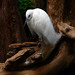 Big White Bird by § Mary §