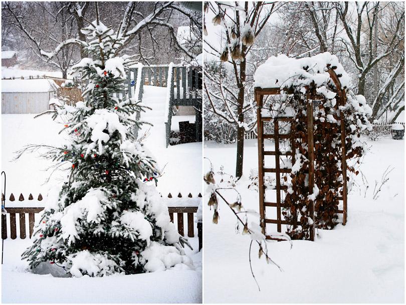 Christmas Tree & Garden Arch