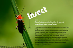 Insect (Chrisseee) Tags: orange green canon insect canon300d font dictionary kristiinahillerstrm chrisseee ketosylkikuoriainencantharisrustica kuoriaiset