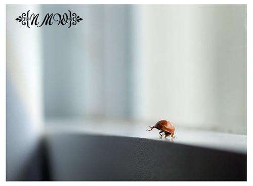 19/365 ladybug handstand
