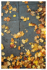 Dead Leaves (Ben Heine) Tags: life camera autumn light red sky orange art fall nature colors yellow clouds composition photoshop season lens landscape rouge photography death freedom photo leaf nikon dof d70 time cloudy pov earth lumire mort space air horizon perspective creative deadleaves atmosphere manipulation oxygen ciel libert montage abstraction minimalism conceptual breathe emptiness vide mortal saison cs4 luminosity vrijheid feuillesmortes benheine joune infotheartisterycom