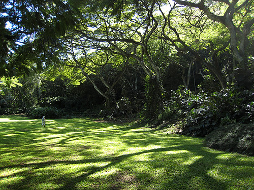 Waimea Valley - North Shore Oahu