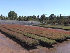 "Seedlings acclimatising for planting <a style=""margin-left:10px; font-size:0.8em;"" href=""http://www.flickr.com/photos/47172958@N02/4327138199/"" target=""_blank"">@flickr</a>"