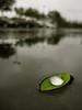 Cute Leaf (moofyboof) Tags: nature wet water leaf parkinglot waterdrop fresh clean simple waterwatereverywhere waterdropmacro thesmellofrain cleanearth barrenthemepark
