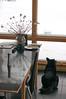more snow tonight (nosha) Tags: new winter usa snow storm 50mm newjersey snowstorm nj mercer jersey february f56 blizzard mercercounty 50mmf14 2010 lightroom beauregard blackmagic 160sec nosha nikond40 160secatf56 blizzard2010
