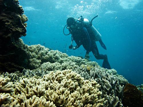 Flores Underwater 23