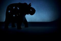 Elephant silhouette #58/365 (A. Aleksandravičius) Tags: elephant macro oneaday silhouette 35mm nikon photoaday 365 nikkor siluetas smallworld pictureaday d60 project365 365days nikond60 58365 dramblys f18g 35mmf18g afsdxnikkor35mmf18g nikon35mm18g dpssilhouettes