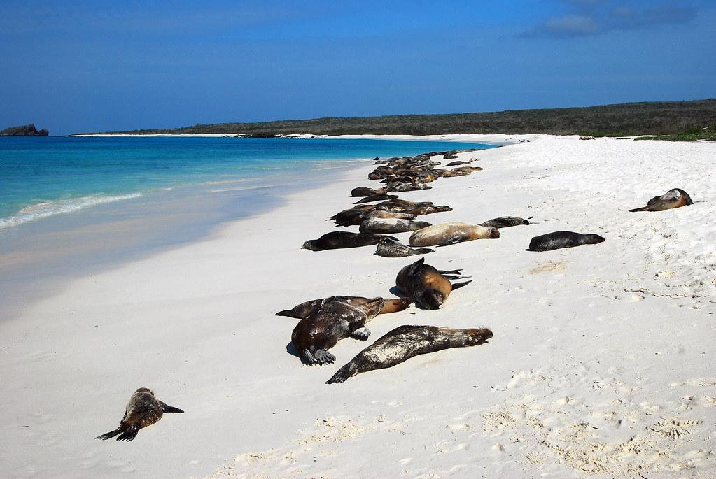 Galapagos Islands-508
