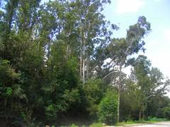 RIMG5803x1000 (Weltbummler) Tags: yerbabuena tucumn bosquenublado nuboselva