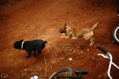 Dog Play (Garrett Meyers) Tags: life tv bmx day marcus beers smoke aaron ken trails obrien travis kizer garrettmeyersfoto