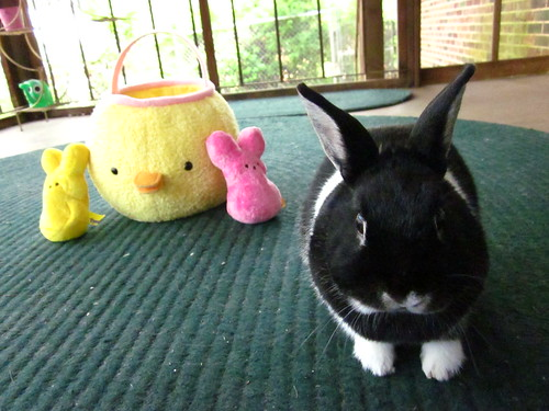 Oreo getting ready for Easter.