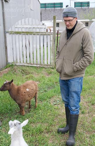 Farm_Goats2