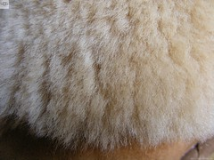 UGG-5803-SheepSkin-Chestnut-17 (WWW.UGG.TW) Tags: shoes boots ugg 5803