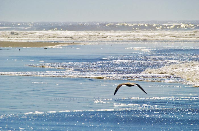 A lone sea bird soars above the surf at Olympic National Park's Second Beach.