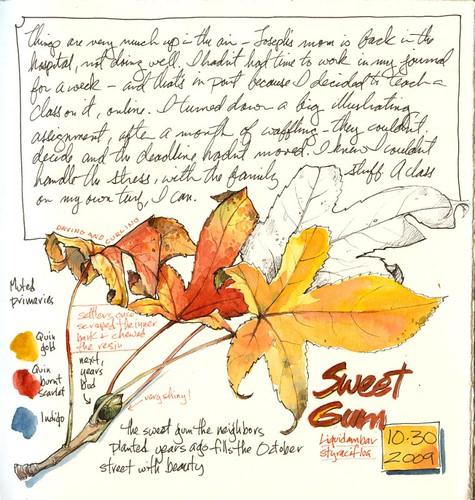 Sweet Gum Autumn