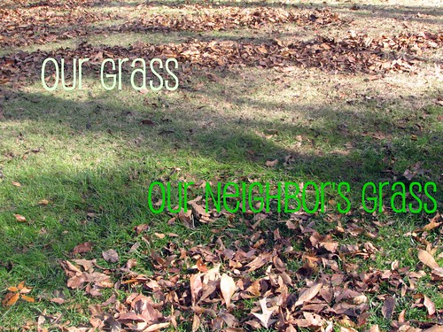 The grass REALLY IS greener