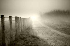 (andrewlee1967) Tags: fog mist cloud fence path track canon50d ef50mmf18 andrewlee1967 gravel bushes uk gb england britain light sepia mono wet damp scammonden intothelight explored explore frontpage andrewlee