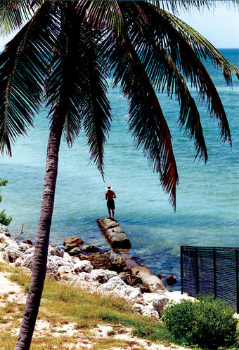 Pointing Palm Tree, Bahia Honda, 2000