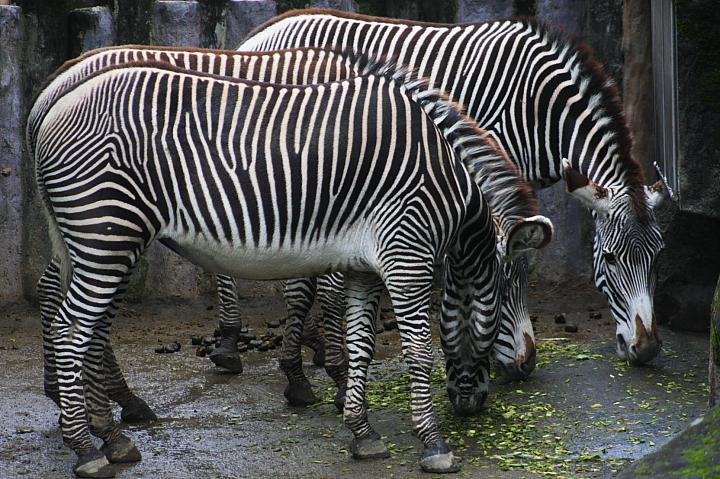 2009木柵動物園0020