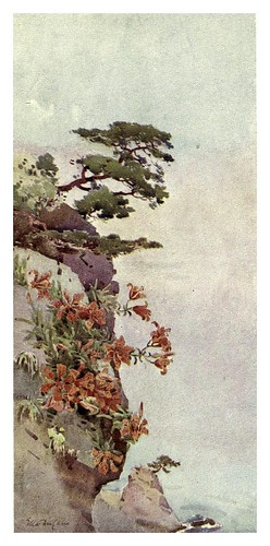 011- Lirios en las rocas-Atami-The flowers and gardens of Japan (1908)-  Ella Du Cane