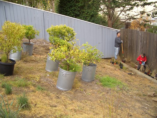 Corwin Street Community Garden: Urban Orchard