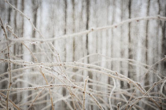 rimfrost 3