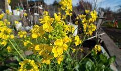 rgg_20100202_151312 (rgordon) Tags: urban garden hillside earlyspring