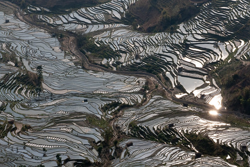 Hani rice terraces