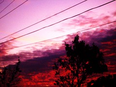 if it were pink (absolutelyultimate) Tags: trees sky color fall clouds altered powerlines 2009 pointshoot