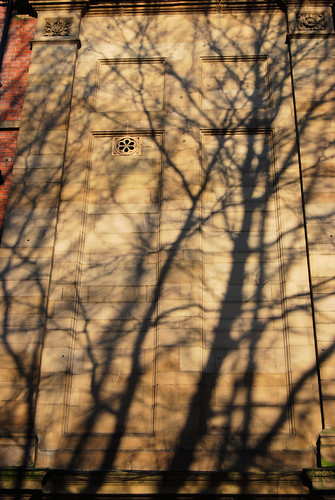 Tree shadow on wall - texture
