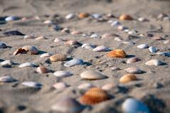 Pebbles and seashells