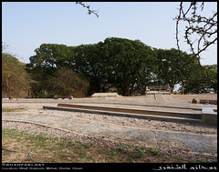 Wadi Shaboon, Dhofar (Shanfari.net) Tags: winter summer nature lumix raw natural panasonic fabaceae oman wadi fz tamarind  zufar rw2 indica salalah sultanate dhofar shabon  tamarindus  khareef   mirbat     tamarindusindica      governate  shaboon   dofar fz38 marbat  fz35 dmcfz35
