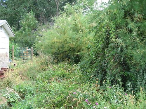Original creek area