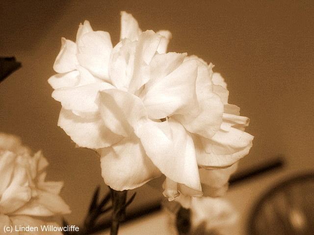 Vintage Carnation
