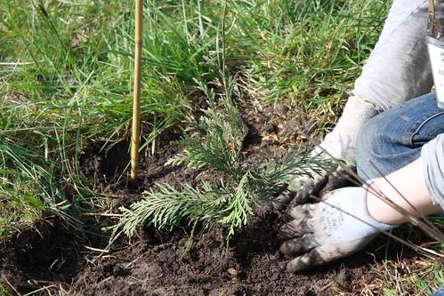 Planting trees... (Greg Tudor)