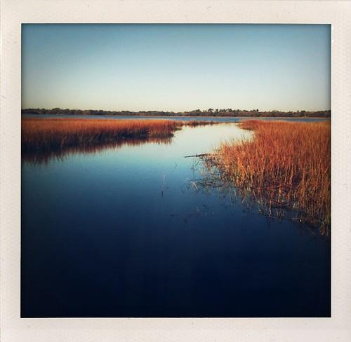 marsh -poloroid