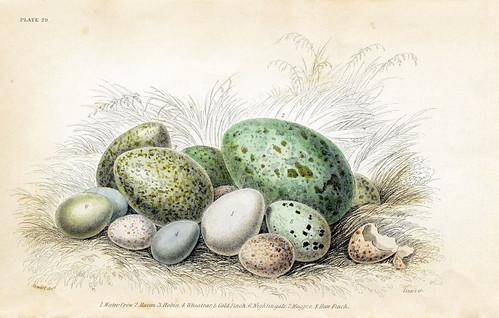 Vintage Eggs