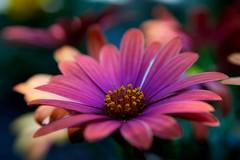 Flower (Harm Weitering) Tags: flower color nature nikon natuur sigma emmen bloem kleuren d5000